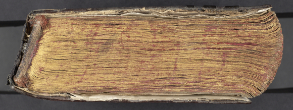 Gilded edges of the text block, with too-small leather covers. British Library, Or 15877, bottom edge.