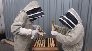 Photo by Jessica Chia - Salma in her beekeeping outfit