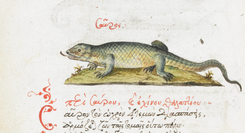 Representation of a lizard from a 16th-century copy of a Byzantine Bestiary
