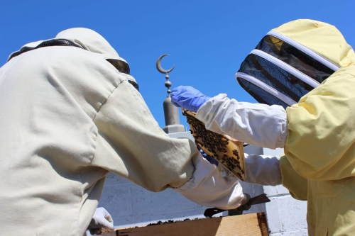 Salma and her husband at their hives on the roof of the East London Mosque for Bushwood Bees