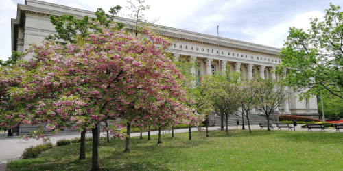 Photograph of blossoming Japanese morello cherry-trees in front of the Bulgarian National Library