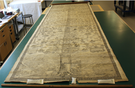 The full Heroldt - pedigree of Germanic kings scroll laid out on a long table in the conservation centre