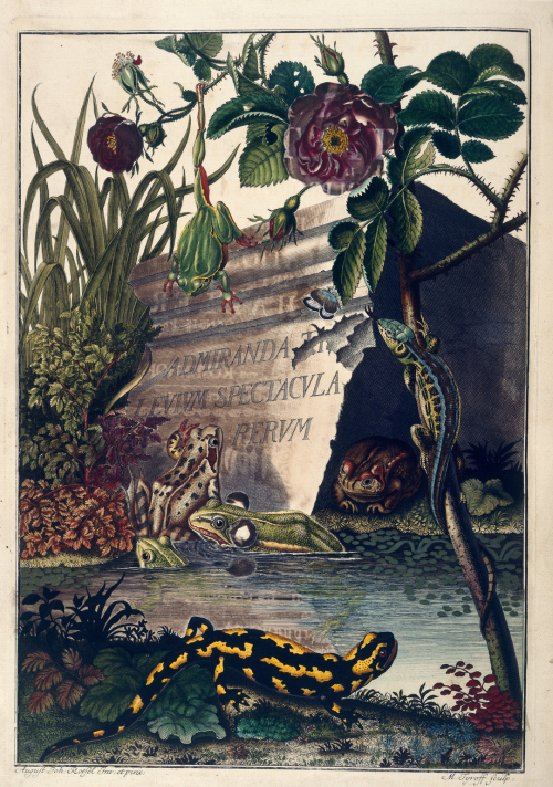 Illustration of amphibians from an 18th century German book