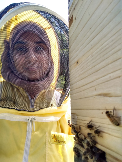 Salma at the entrance of her hive while working at Bushwood Bees