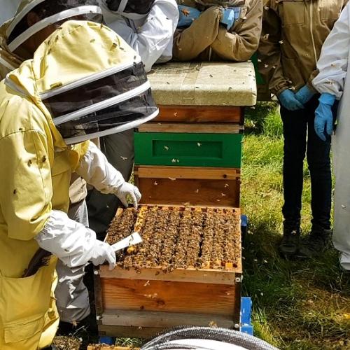 Salma Attans Bushwood Bees beekeeping course