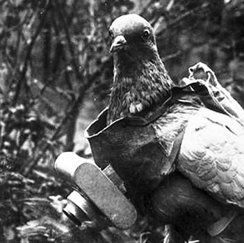 Photograph of a pigeon with German miniature camera
