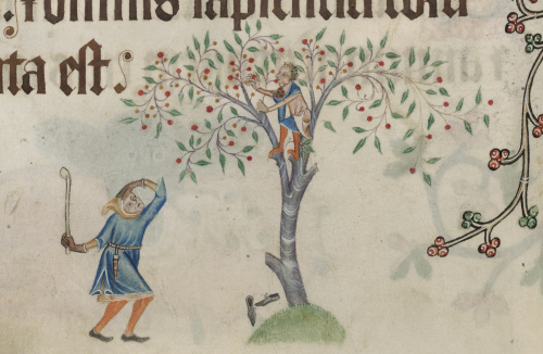 Medieval manuscript illumination of a boy stealing cherries from a tree, with an angry club-wielding man coming to punish him, from the Luttrell Psalter