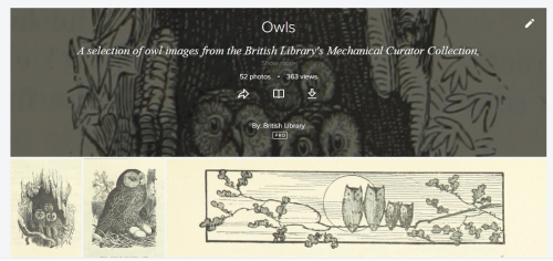 Book illustrations featuring owls