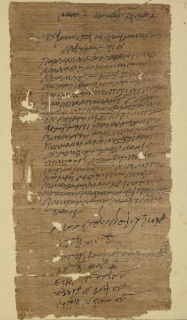 A declaration of camels