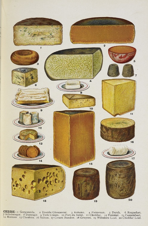 Illustration of various cheeses