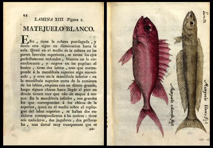 5. Parra  Cuba