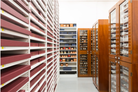 The storage facility for scrolls at the British Library consists of white open shelving or glass enclosed wooden cabinets holding individually boxed scrolls.