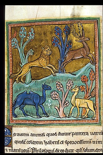 A manuscript image of a leopard chasing a stag, with a camel and another animal