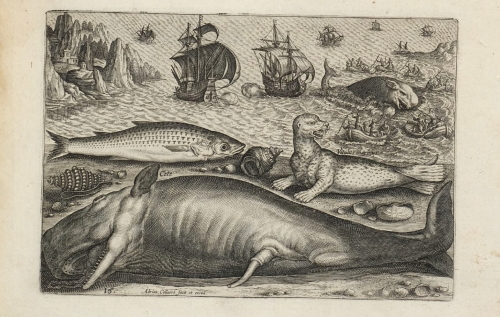 Harpooned Whale