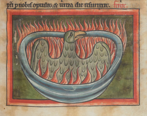 A manuscript illustration of a phoenix rising from the ashes and surrounded by flames