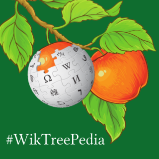 Two apples on a branch, one of them is a Wikipedia globe, the background is dark green