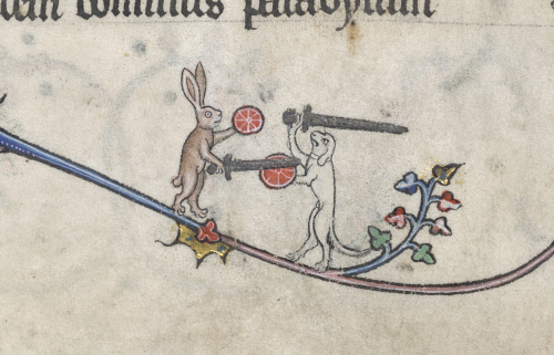 A rabbit and a hound fight with swords and shields