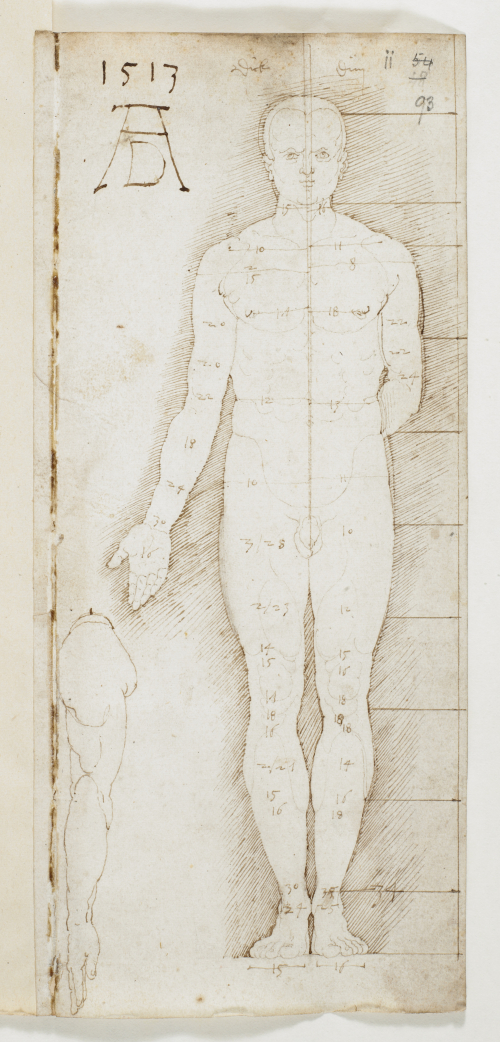 Proportion drawing of a male nude with a framework of horizontal and vertical lines and detailed measurements
