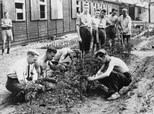 Black and white photograph of British Prisoners of War gardening at Stalag Luft