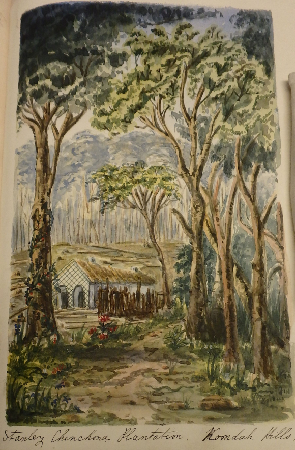 Colour sketch of the Stanley Cinchona Plantation in the Kundah Hills in India showing trees and plants with a building in the background