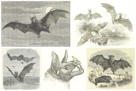 Selection of bat illustrations selected from the British Library's Flickr collection