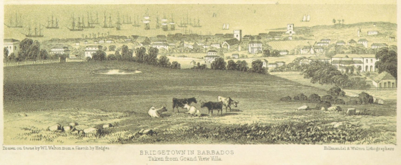 View of Bridgetown Barbados in the 1840s showing the town and harbour in the distance and fields with cattle in the foreground