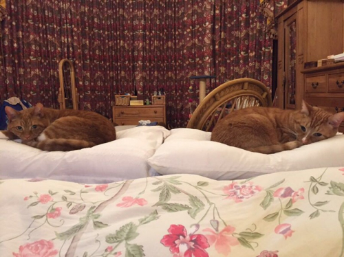 Photograph of two cats on cushions