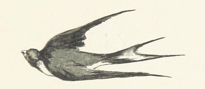 Swallow - Carol of the Bells