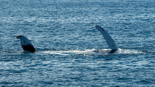 800px-Boston_-_Two_Fins_of_a_Whale_(48718899016)
