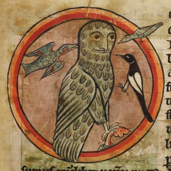 Owl mobbed by smaller birds, Harley 4751, f.47 – Amy's favourite collection item