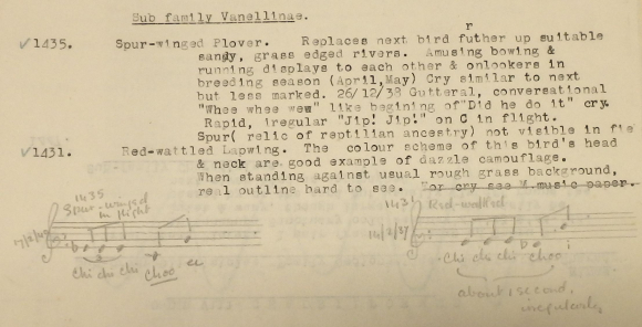 Dorothea Craigie Milburne's notes on the Spur-winged Plover